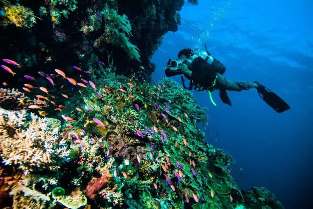 Diver Enjoying Vacation Time | Sebastus Sailing