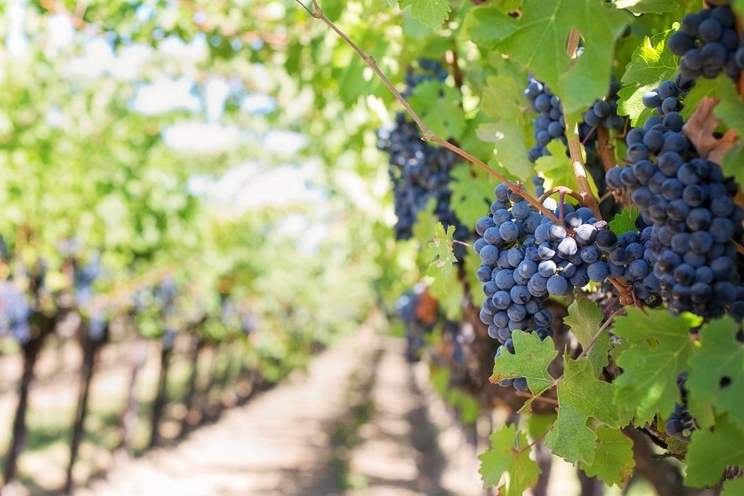 sebastus, wine regions, wine regions of Italy, wine cruises, wine cruise, wine regions of spain, wine regions of europe